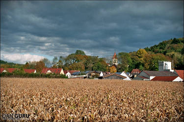 Field in the town