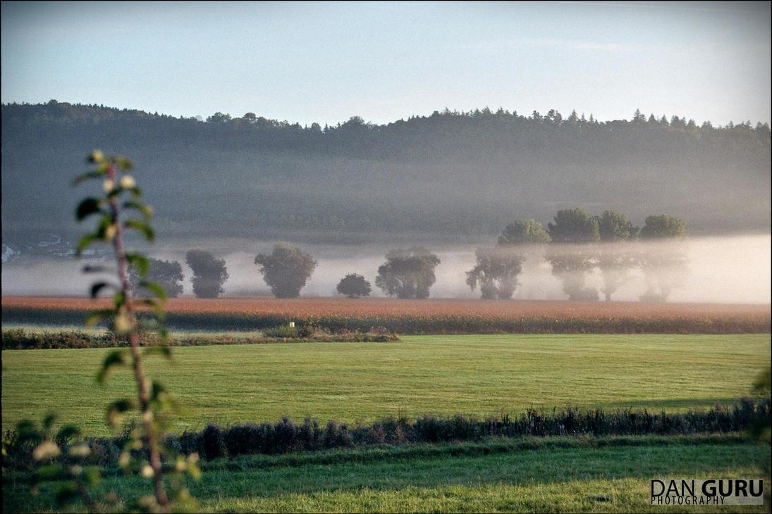 Through Fog - Trees by RoqqR