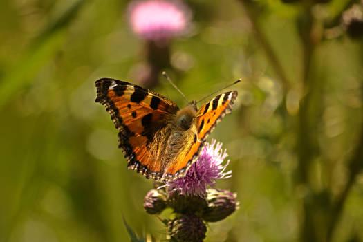 Oh my little butterfly...