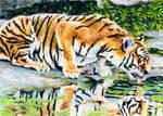 1.16: Tigers Lambent