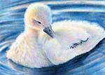 ... Duckling