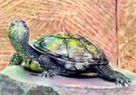 10.19 Basking Turtle