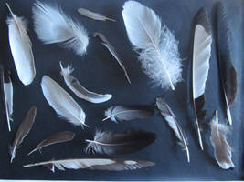 Feathers I by JeanneyStock