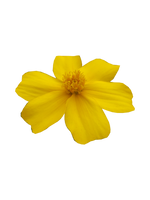 Yellow flower (precut) by JeanneyStock
