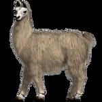 Lovable Llama Test