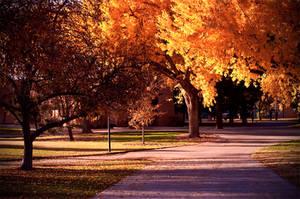 Fall Trees by Cambiocorsa