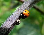 ladybird and a bug