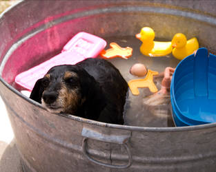 Dogs Like Bath Toys Too by COphotog