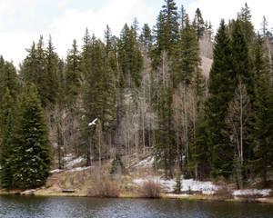 Springtime in the Rockies 2