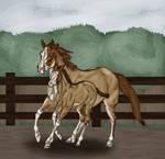 Diamond in the Rough - Dutchess Foal Bid