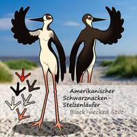 OC Black-necked Stilt