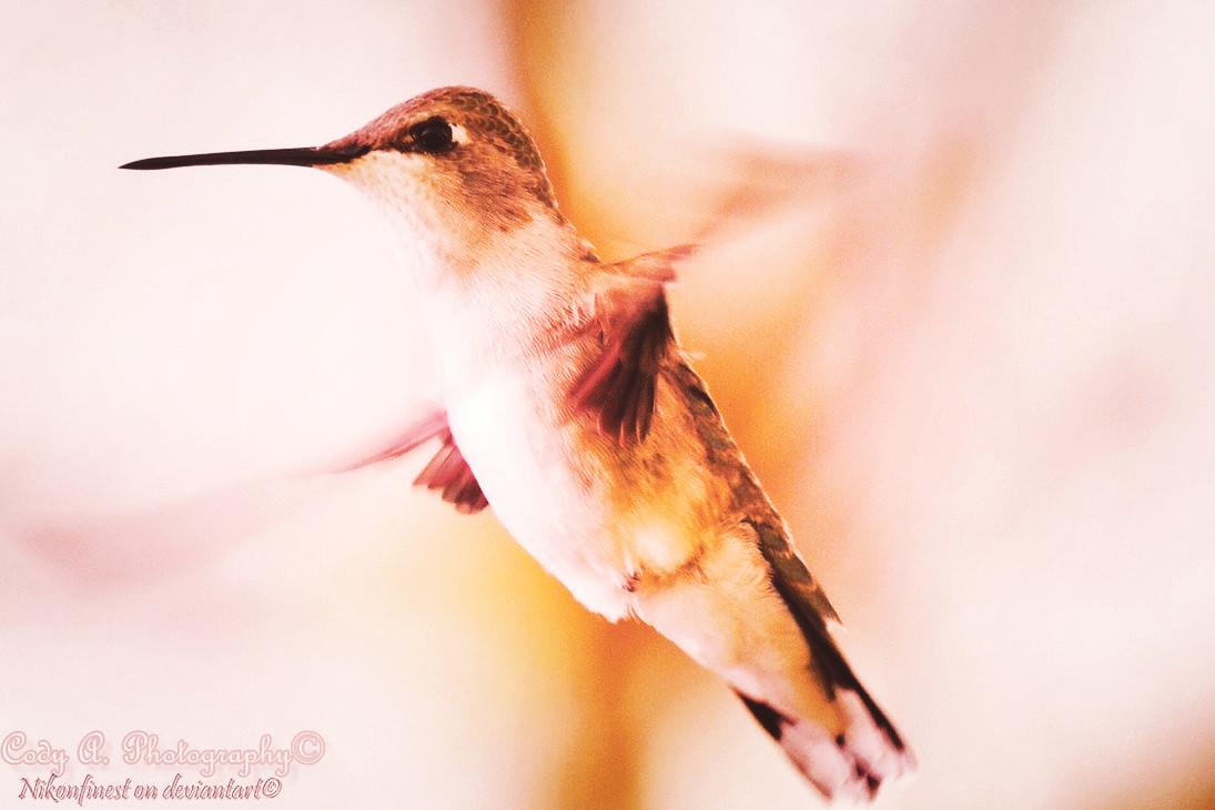 Hurried wings, nimble beauty by Nikonfinest