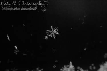 Winter wonderlands of snow by Nikonfinest