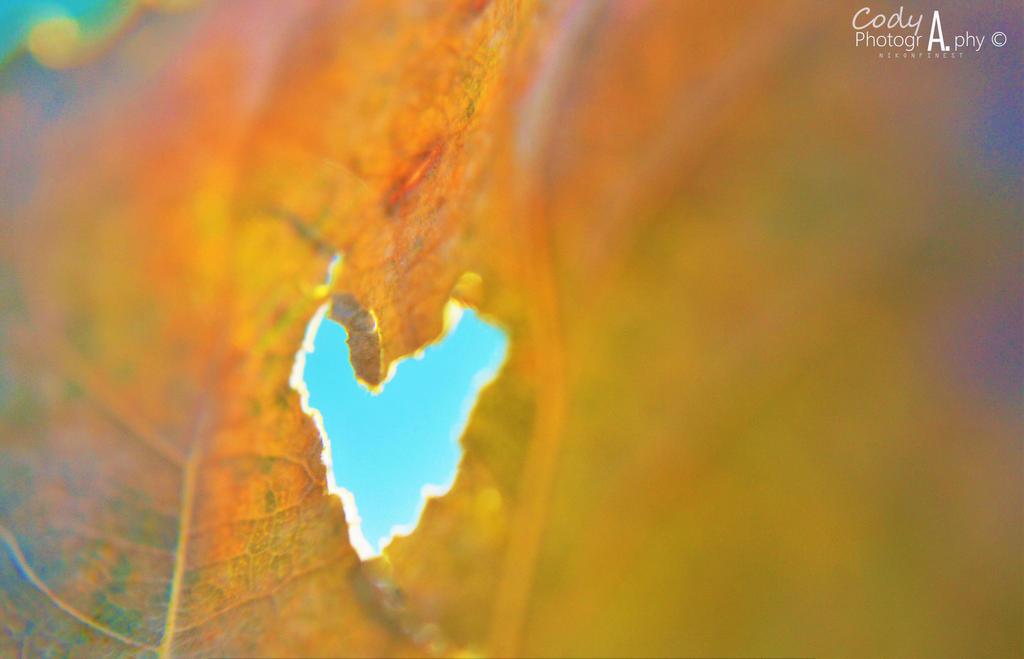 Falling in love again by Nikonfinest