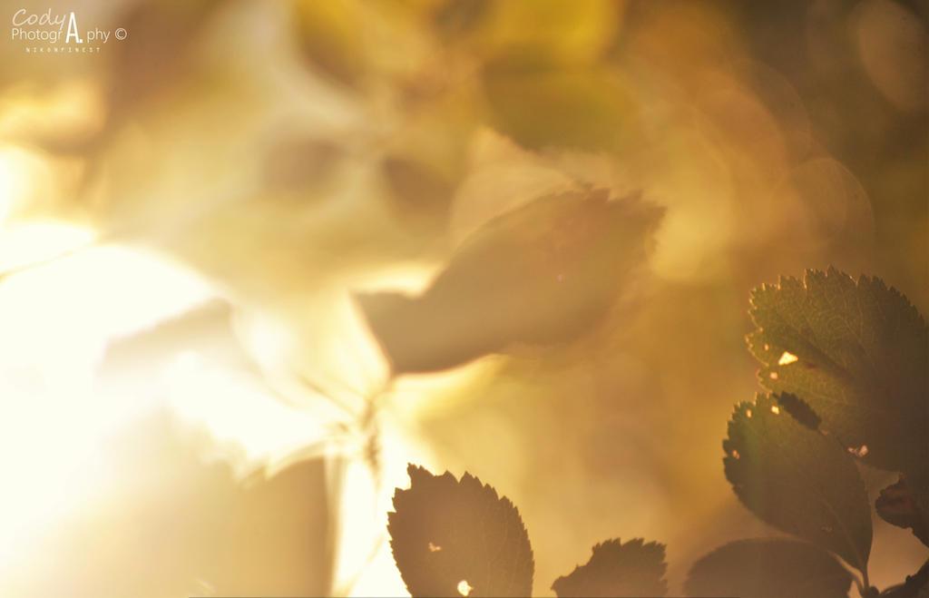 Leaf it behind by Nikonfinest