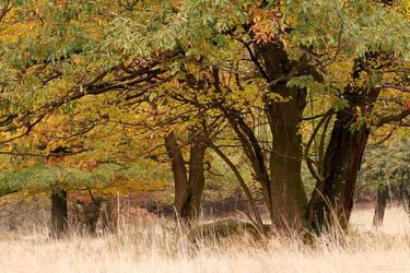Forest Glade by miroslav-petrinec