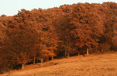 Warm November by miroslav-petrinec