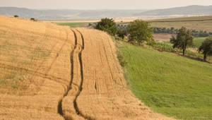 Field Grain I