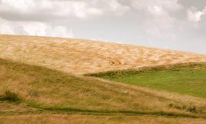 Field Grain III
