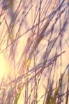 Sun and Grass