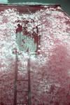 Pink Entrance