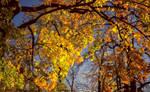 Autumn Lines