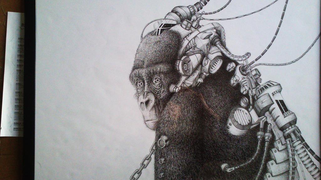 gorilla by TomHeye