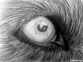 Dog Eye by andrepa