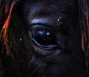 Beauty's Eye