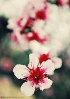 Fleurs du printemps by Black-Ban