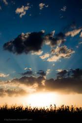 Sunset over the Cornfield by Famvlvs