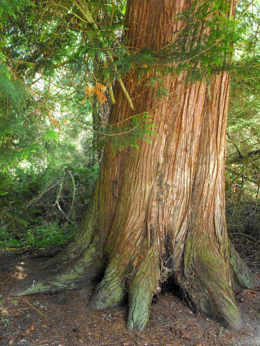 <b>Tree trunk</b>   Frozen Time