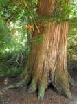 Stock: Tree Trunk I