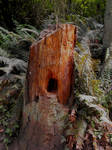Stock: Tree Trunk II
