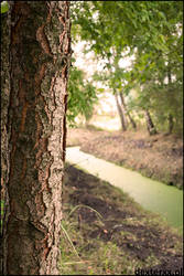 Just a tree with green river by Dexterxx