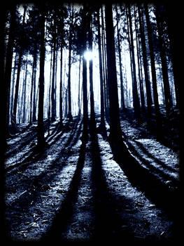 forestIII