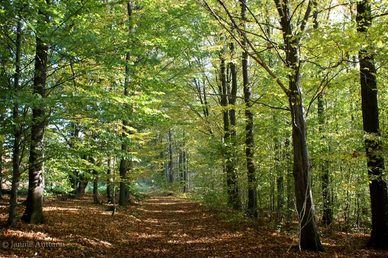 Autumn Colors by Janine-Autumn