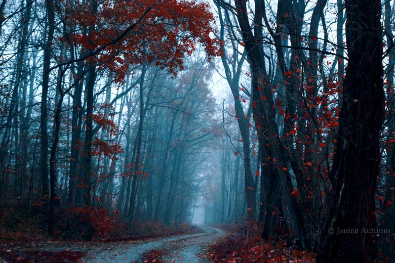 Don't follow me by Janine-Autumn