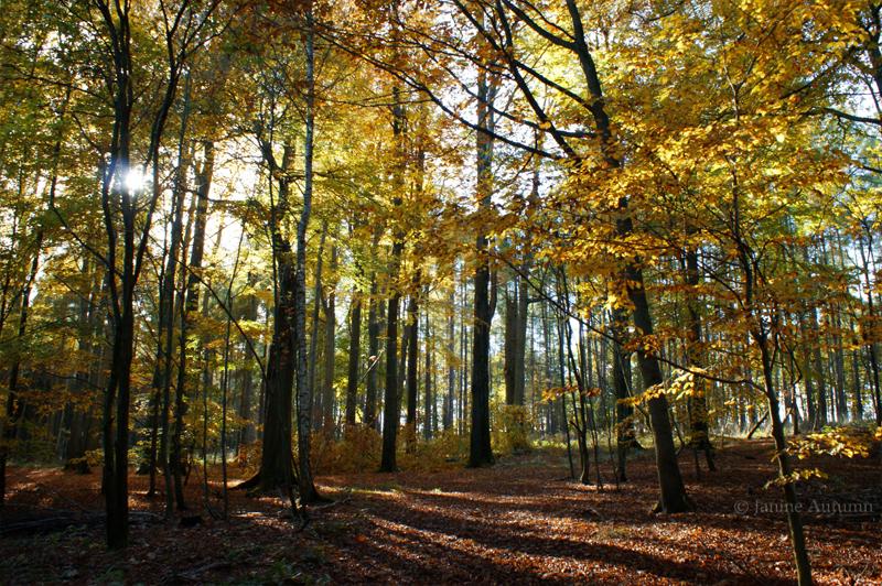 Autumn Colors 2 by Janine-Autumn