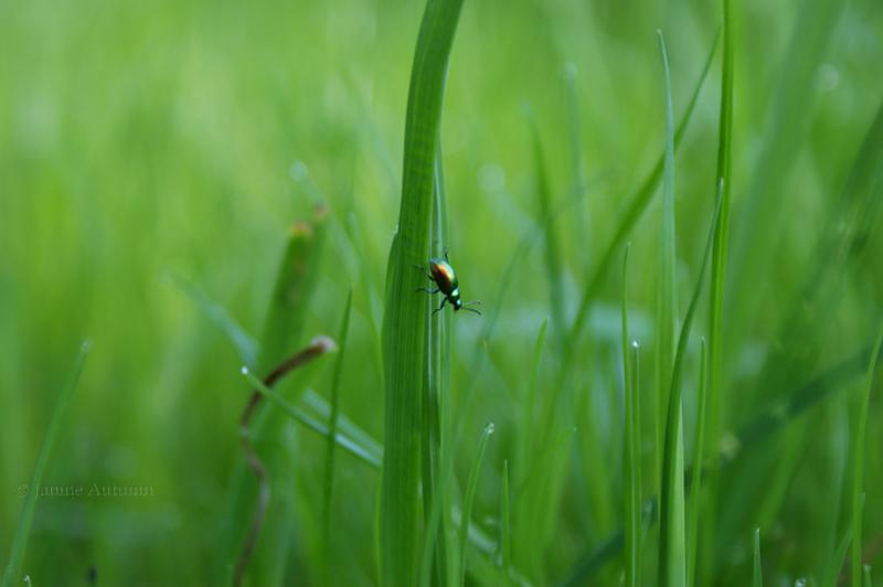 little bug by Janine-Autumn
