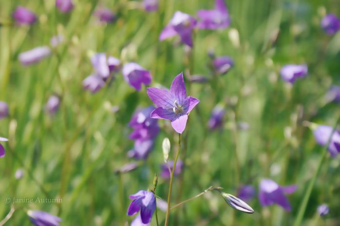 .violet. by Janine-Autumn