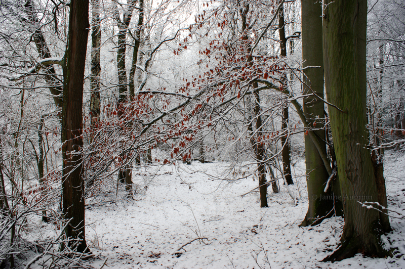 Winter Forest by Janine-Autumn