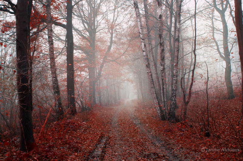 Forest 11 by Janine-Autumn