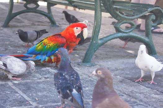 Parrots and dows