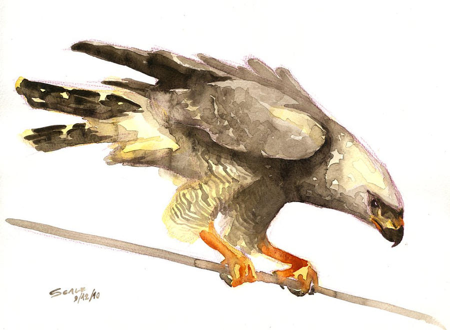 Hawk painting watercolor - photo#14