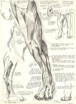 Synetai wolf leg