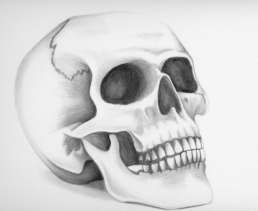 skull illustrations - Video Search Engine at Search.com