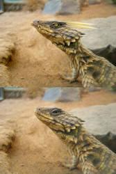 Dragon in my terrarium