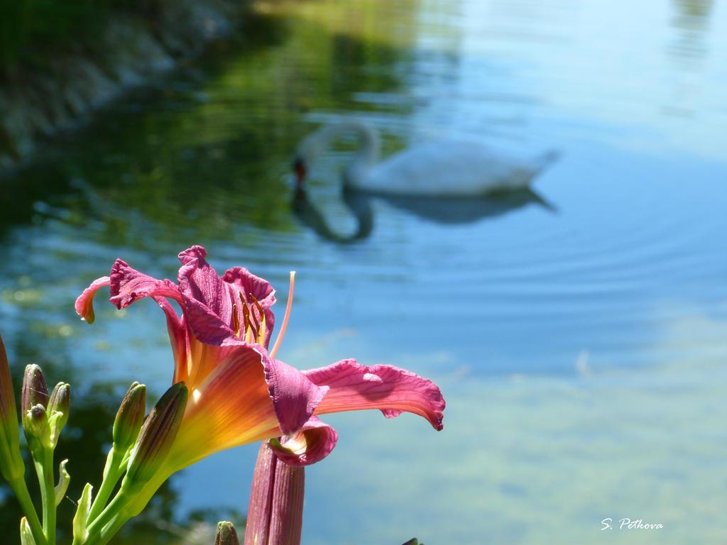 Swan lake by LaMinipouss