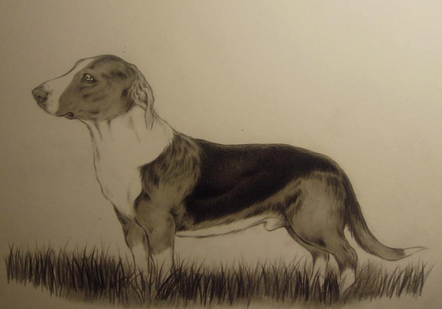 dog art by Honeycorn